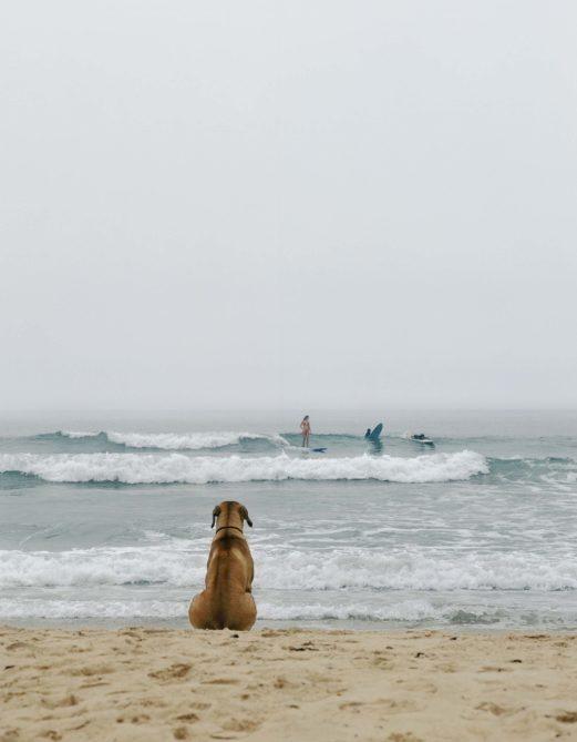 Beach Dog