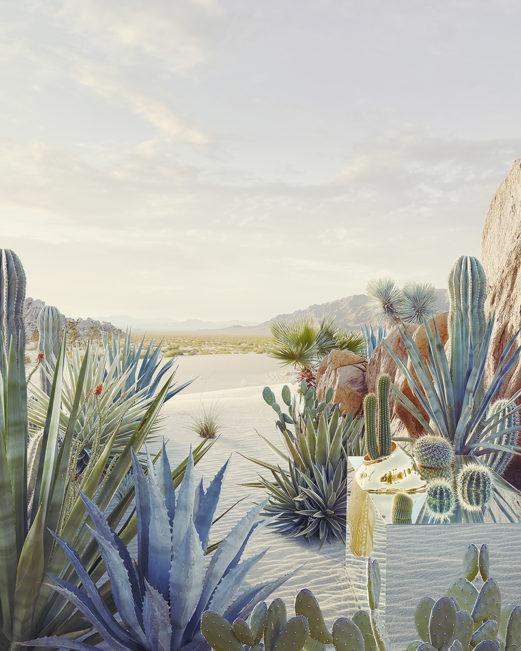 Still Life #1, Desert Oasis